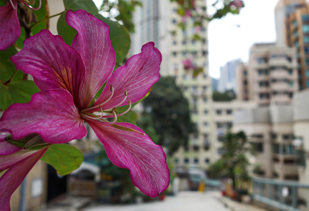 starting-with-a-blog-hong-kong-kennedy-town-16