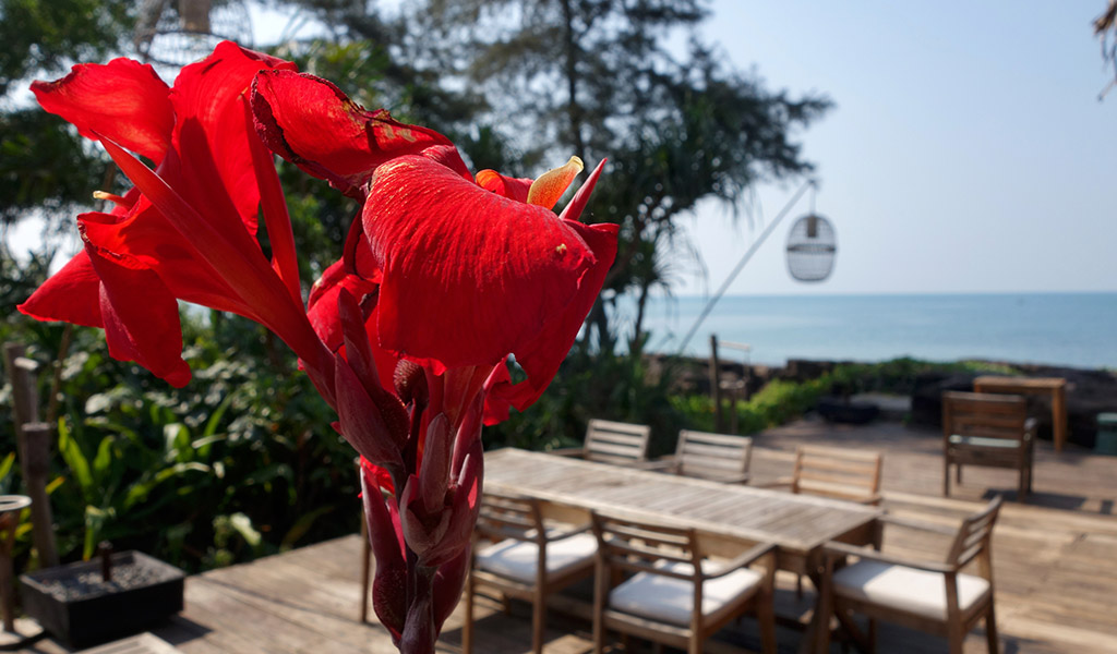 starting-with-a-travel-vietnam-red-flower