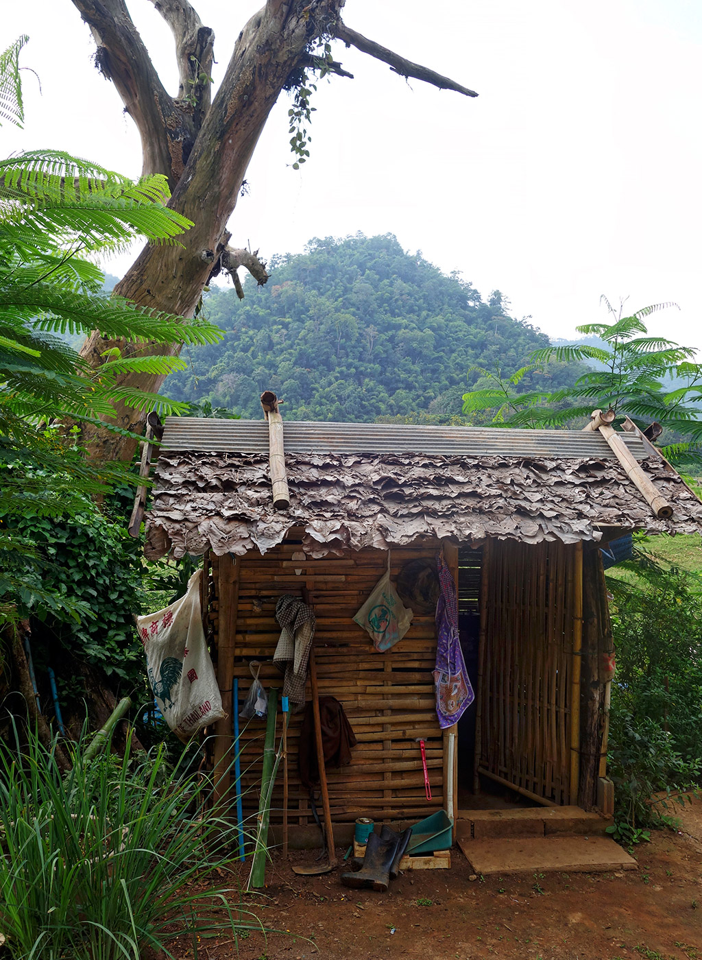 chiang-mai-thailand-elephant-sanctuary-14